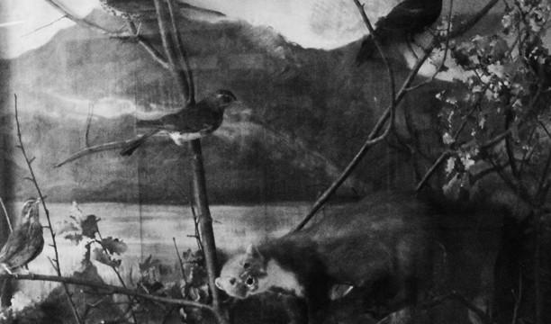 Animagus, un'opera di Roberto Paci Dalò